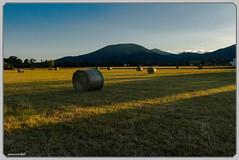 Les bottes du Viel-Armand (jamesreed68) Tags: bottes foin vielarmand paysage nature france grandest 68 alsace hautrhin soultz soleil montagne