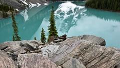 Rockpile perch (naromeel) Tags: banff canada nature reflection