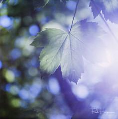 Bokeh (1) @ Amsterdamse Bos (PaulHoo) Tags: kowa six film mediumformat analog bokeh dof amsterdamse bos forest woods light backlit 120mm squareformat