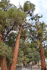 DSC_0179 (Six Sigma Man (2.700.000 views)) Tags: bigbear california bigbearlake cougarcresttrail nikon nikond3200