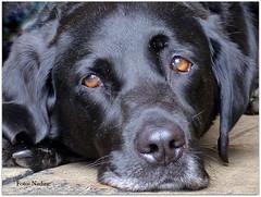 Bored... a Dog with no Name (Nadine V.) Tags: rye eastsussex england uk panasonic panasonicdmcfz200 lumix fz200 dmcfz200 dog hond chien