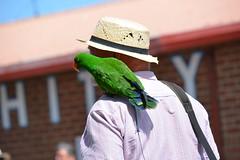 Pirates day off. (rawdonfox) Tags: pirate parrot green joke whitby rawdonfox nikond5200 nikon