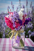 Summer in a jar (Ruth Flickr) Tags: england wick worcestershire colour confetti delphinium farm field flora flowers horticulture larkspur seasonal summer