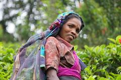 Sri Lanka, tea pickers (11) (walterkolkma) Tags: srilanka tea pickers teapickers centralhighlands nuwaraeliya strathdon teaestates women laborers tamils sonya6300