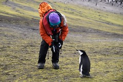 Caitlyn says hello to a Chinstrap Penguin (Scott Ableman) Tags: caitlynwebster shetlandislands baileyhead chinstrappenguins chinstrappenguin chinstrap penguin nationalgeographicexpeditions lindbladexpeditions nationalgeographicorion antarctica parkas orange orangeparka