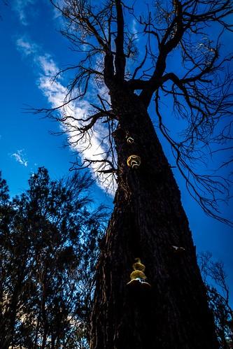 Ghost Mushroom Hunting Daytime-15