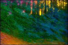 20170605-052 (sulamith.sallmann) Tags: landschaft natur blur bunt bäume colorful effect effekt filter folientechnik forest landscape nature trees unscharf wald brandenburg deutschland deu sulamithsallmann