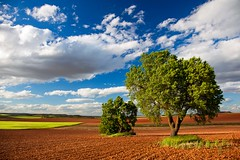 The poetry of earth (Castilla la Mancha, Spain 2013) (Alex Stoen) Tags: agriculture bliss castillalamancha clouds compositionexercises cuenca earth fertile fields green greenfields happiness landscape naturalbeauty nature open redland sky torrubiadelcastillo travel contrast expanse polarizingfilter spain