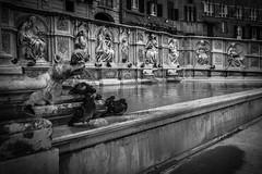 Via Francigena Memoires 11/15 (gioklaic) Tags: viafrancigena viaggivacanze
