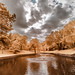 Duck Pond IR