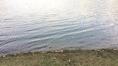 IMG_3085.TRIM (Guru Charan317) Tags: beauty coolpalce india kerala munar tourist place