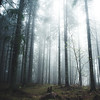 in the woods (Nippe16) Tags: woods forest scary mood moody earth tone tones atmosphere landscape finland suomi