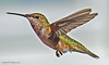 Buzzing Along (jimgspokane) Tags: hummingbirds hummers birds wildlife idahostate otw today´sbest