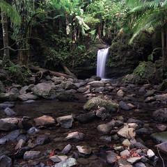 same ol' same ol' (Eddie La Mole) Tags: elyunquenationalforest rainforest cascade waterfall film mediumformat 6x7 bronicags1 zenzanonpg50mm kodakektar c41 selfdeveloped