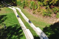157 Alpine Sleds (megatti) Tags: alpinesleds gatlinburg obergatlinburg race sleds tennessee tn