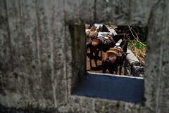 The Window (irvingrobledo) Tags: horses caballos ventana window hole hueco agujero wall pared