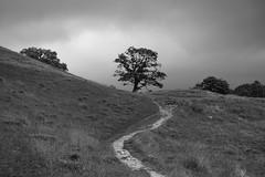 waiting for the rain (christiane.grosskopf) Tags: landscape landschaft trees bäume gewitterstimmung path pfad bw blackwhite blackandwhite sw schwarzweiss england lakedistrict