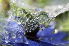 Blue planète... (mars-chri) Tags: roséedumatin toile araignée prairie auverssuroise valdoise panète danger blueplanète