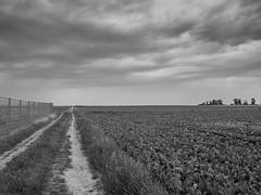 Der Weg (Carlos Lacano) Tags: bw black white way field landscape leica digilux 2 carlos lacano germany
