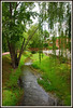 Relaxing Creek - Explore #67 (Jerry Jaynes) Tags: creek jonesbough tennessee tn weepingwillow water bridge trees explore nikkor1685vr