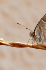 No terraço (LuPan59) Tags: lupan59 oeiras fauna insectos borboletas