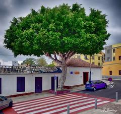 Viaje a Tenerife Mayo-Junio 2017 (Nikonista Spain) Tags: adeje tenerife