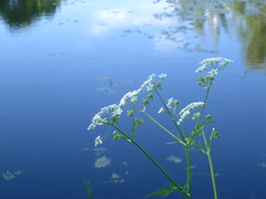 simply beauty (VERUSHKA4) Tags: nature plant flora album flower canon europe russia moscow city ville vue view cityscape pond reflection green white june summer blue