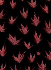 58253.01 Acer palmatum (horticultural art) Tags: horticulturalart acerpalmatum acer japanesemaple maple leaves pattern
