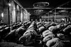 Ramzaan prayers (*shutterbug_iyer*) Tags: prayer peace islam kneeling mosques coordinated menonly bw monochrome fasting feast leading lines