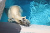 水族館45 (ののリサを信じろ) Tags: 水族館 白熊 カエル 蛙 シロクマ なまはげ 獅子舞 神社 桜 鯉のぼり アシカ