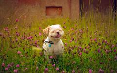 Dog-7070 (EB_Creation) Tags: nikon outside outdoor nature sigma lens camera flowers