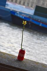 Flower in Coke Can