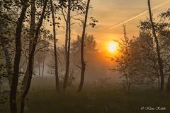 Wittmoor - 20061703 (Klaus Kehrls) Tags: landschaft natur moor wittmoor sonnenaufgang nebel bodennebel wald birken bäume l3