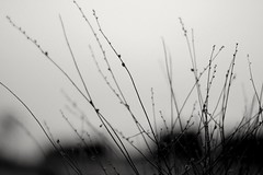 #desert #cholistan #Bahawalpur #Pakistan #sunset #flora #ourbahawalpur #صحرا #چولستان #یونیورسٹی #بہاولپور (Engineer J) Tags: flora bahawalpur بہاولپور cholistan desert pakistan صحرا یونیورسٹی چولستان sunset ourbahawalpur