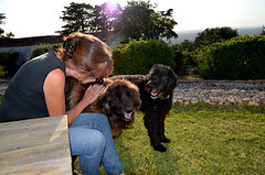Holiday home in Vila Noguira de Azeitao (BuzzTrips) Tags: vilanoguiradeazeitao setubal portugal europe ruralaccommodation countryliving ruralportugalarrábidanationalpark travel dogs mansbestfriend faithful bigdogs shaggydogs