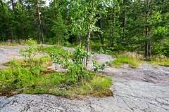 IMG_0996 (luitpold) Tags: helsinki vuosaari