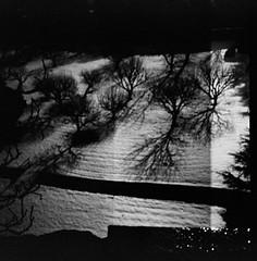 Film0622_01 (aubergina) Tags: diana 120mm night shadows snow tree bergamo winter vogelperspektive