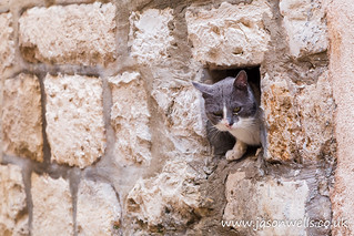 Cat peering out