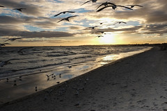 Birds at Aspendale beach (Marian Pollock) Tags: mordialloc beach clouds seascape sky australia victoria sunset melbourne reflections sea silhouette portphilipbay aspendale birds seagulls water cloud