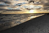 Birds at Aspendale beach (Marian Pollock) Tags: mordialloc beach clouds seascape sky australia victoria sunset melbourne reflections sea silhouette portphilipbay aspendale birds seagulls water