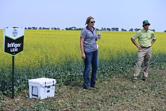 bayer-showcase-nd-17-144 (AgWired) Tags: bayer cropscience showcase plot tour 2017 soybeans canola wheat cereals corn north dakota agwired zimmcomm new media chuck zimmerman