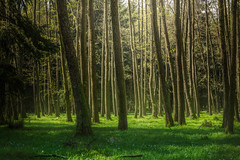 Fresh morning green (Petr Sýkora) Tags: les výlet nature forest trees green grass sunshine morning outdoor wanderlust czech