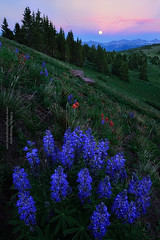 Blue Hours (Mengzhonghua) Tags: wildflower colorado moon rise summer landscape lupine