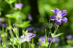 (Sandra Király Pictures) Tags: flowers flower spring outdoor nature botanicalgarden ogródbotaniczny warsaw warszawa poland