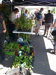 Food4families and RFGN at Reading Water Fest (2) (karenblakeman) Tags: reading uk 2017 june waterfest riversidewalk kennetandavoncanal food4families rfgn readingfoodgrowingnetwork vegetables plants chillies tomatoes courgettes squash sweetcorn basil parsley