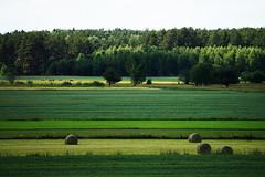 (Ciuchniecki Photography) Tags: podlasie podlaskie magiapodlasia forest las space farm zabłudów green