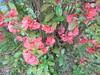 1136 (en-ri) Tags: fiorellini flowers sony sonysti cespuglio little