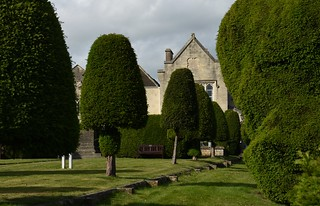 Ancient yew trees in Painswick, Gloucestershire