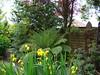 Wollemia Nobilis 03.06.2015. (NashiraExoticGarden) Tags: wollemianobilis exotentuin exoticgarden 03062015