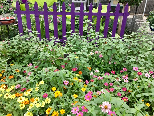 Wheaton MD ~ Brookside Gardens
